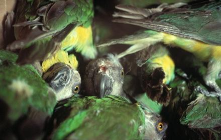 kenmerken van een vogel ivm klein